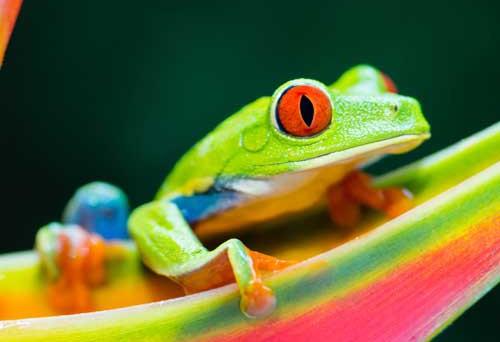 Design tendances marketing grenouille