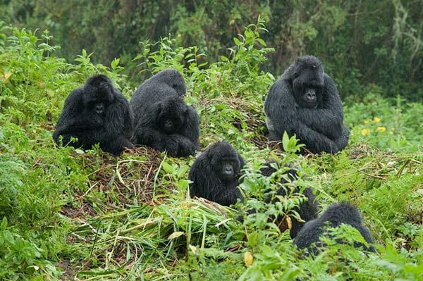 Luxe voyage ouganda