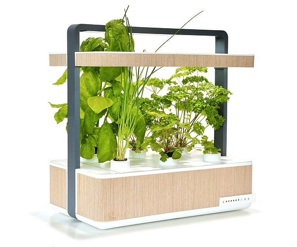 tendances futurs potagers d'appartement Basile