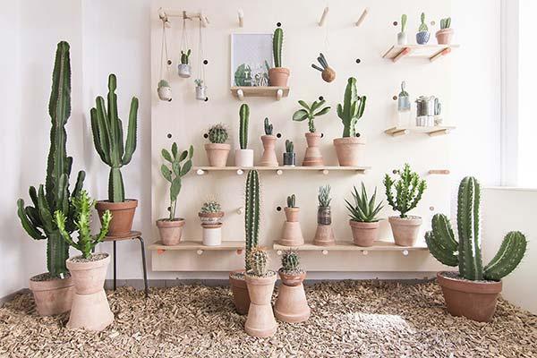 tendances beauté plantes succulentes