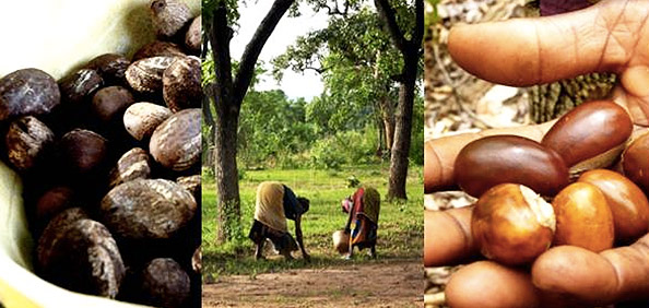 La noix de karité au Burkina Fasso pour Yves Rocher.