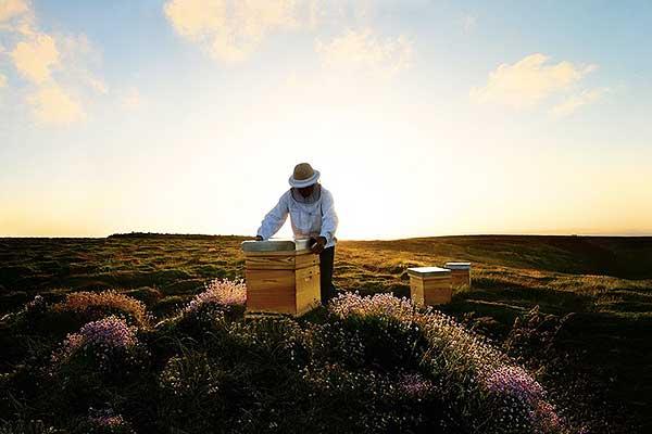 La sauvegarde des abeilles selon Guerlain.